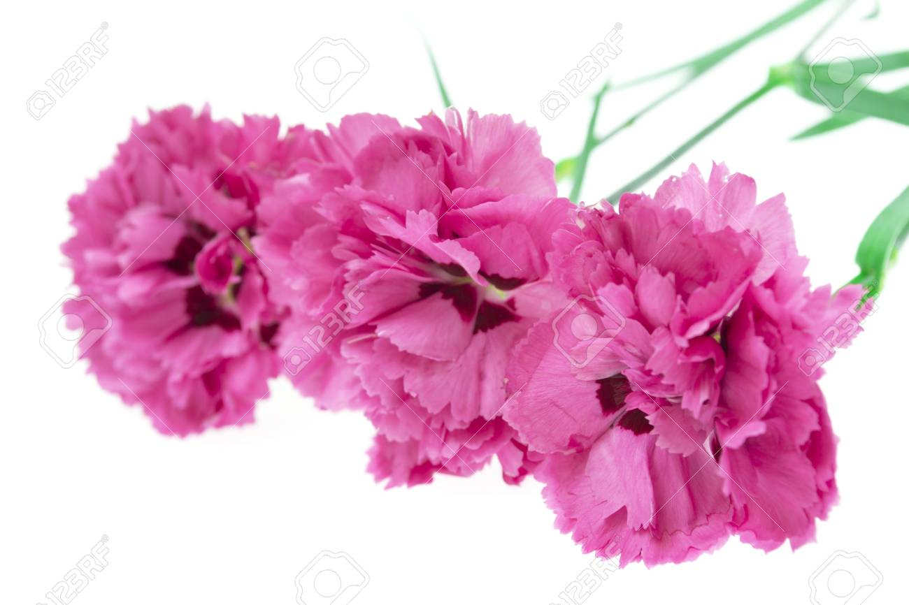 Colorful flowers bouquet Stock Photo - 17707760