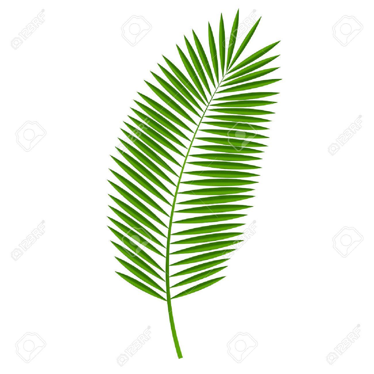 palm leaf vector illustration royalty free cliparts vectors and rh 123rf com palm leaf vector image palm leaf vector pattern