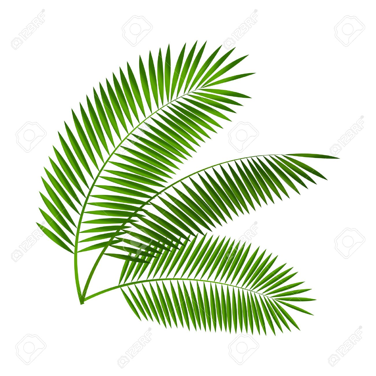 palm leaf vector illustration royalty free cliparts vectors and rh 123rf com palm leaf vector download palm leaf vector file