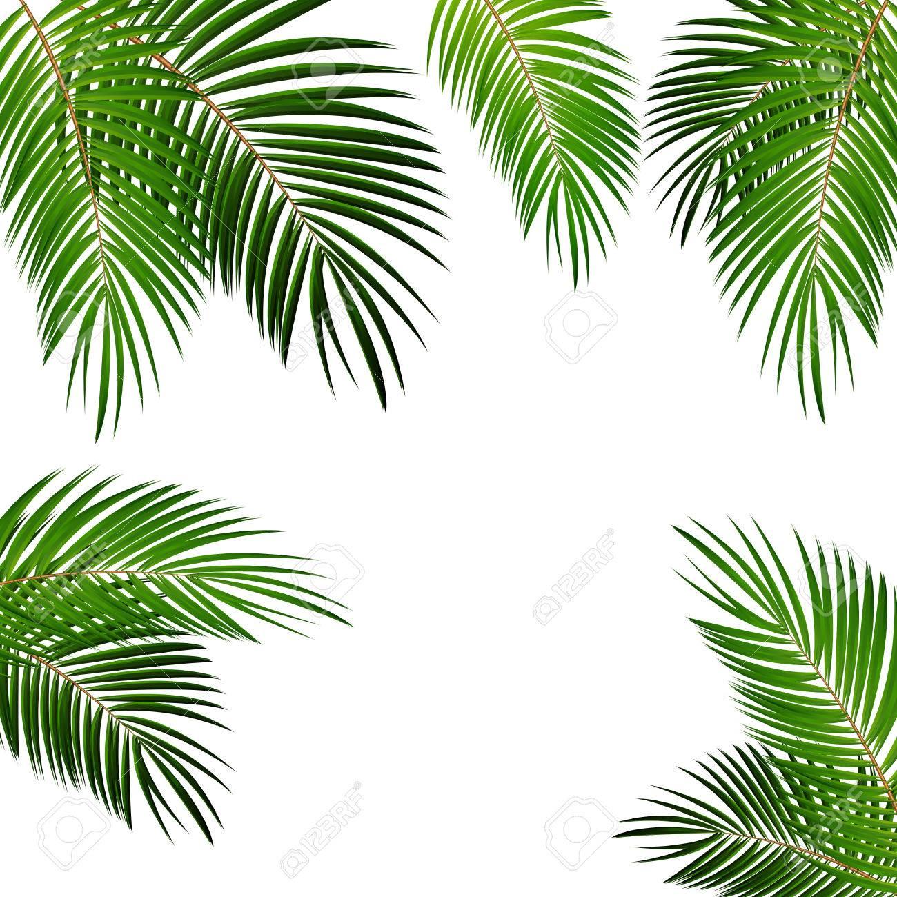 palm leaf vector background isolated illustration eps10 royalty free rh 123rf com palm leaf vector image palm leaf vector file