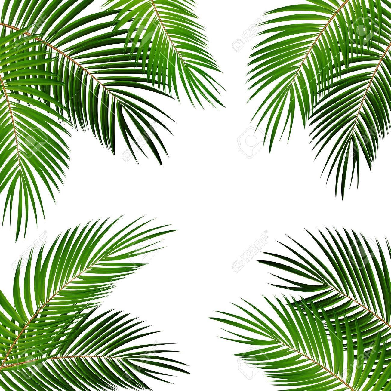 Palm Leaf Vector Background Illustration EPS10 - 51759178