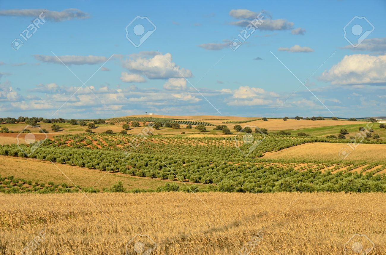 Andalusia is traditionally an agricultural area. The primary cultivation is dryland farming of cereals. The most important tree crops are olives. Standard-Bild - 16333584