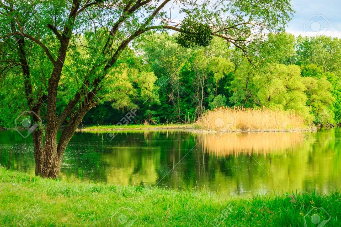 ⭐️ Cảnh Đẹp Mùa Xuân Trên Thế Giới ⭐️ 78995138-beautiful-high-tree-on-the-bank-of-a-clean-river-magical-wildlife-green-grass-on-a-background-of-bri