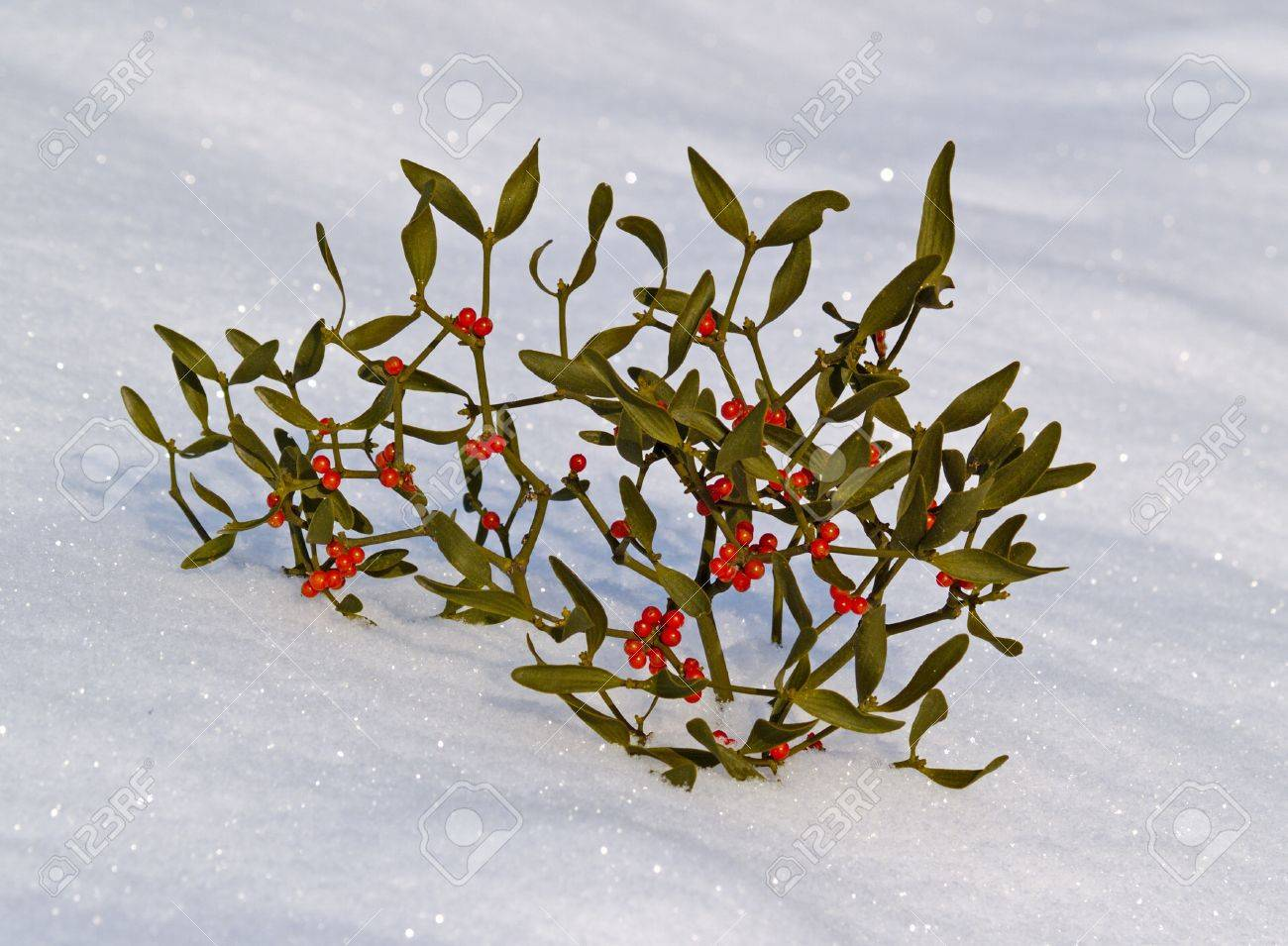 Branch Of A Mistletoe With Red Berries On Snow Stock Photo