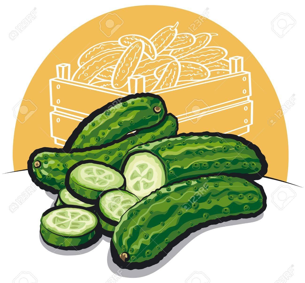 fresh cucumbers Stock Vector - 13343023