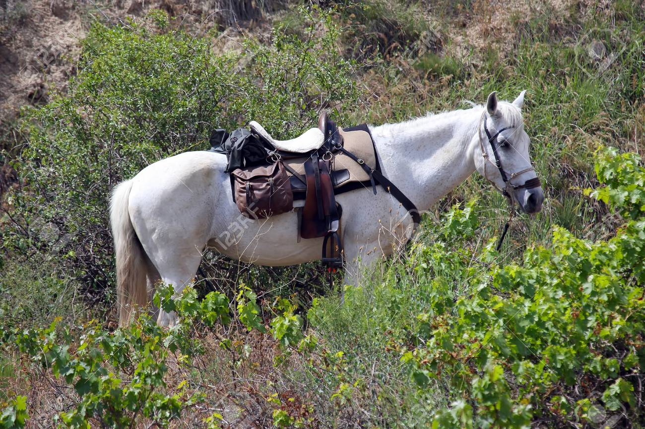 White Horse Gear Saddle On The Nature Stock Photo Picture And Royalty Free Image Image 102400520