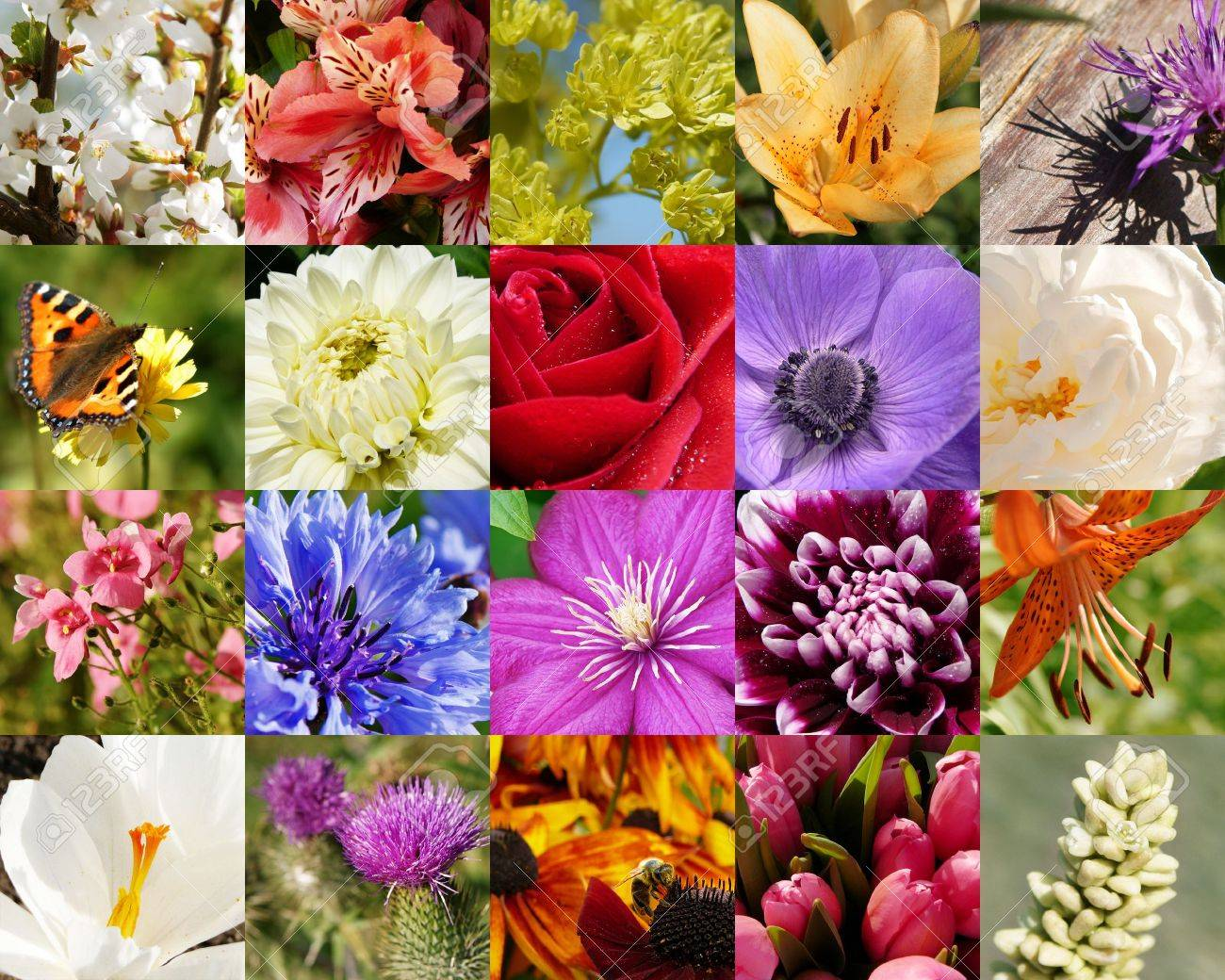 flowers macro collection: roses, lilies, clematis, dahlias, crocus, tulips, cherry blossom, anemone Stock Photo - 6225983