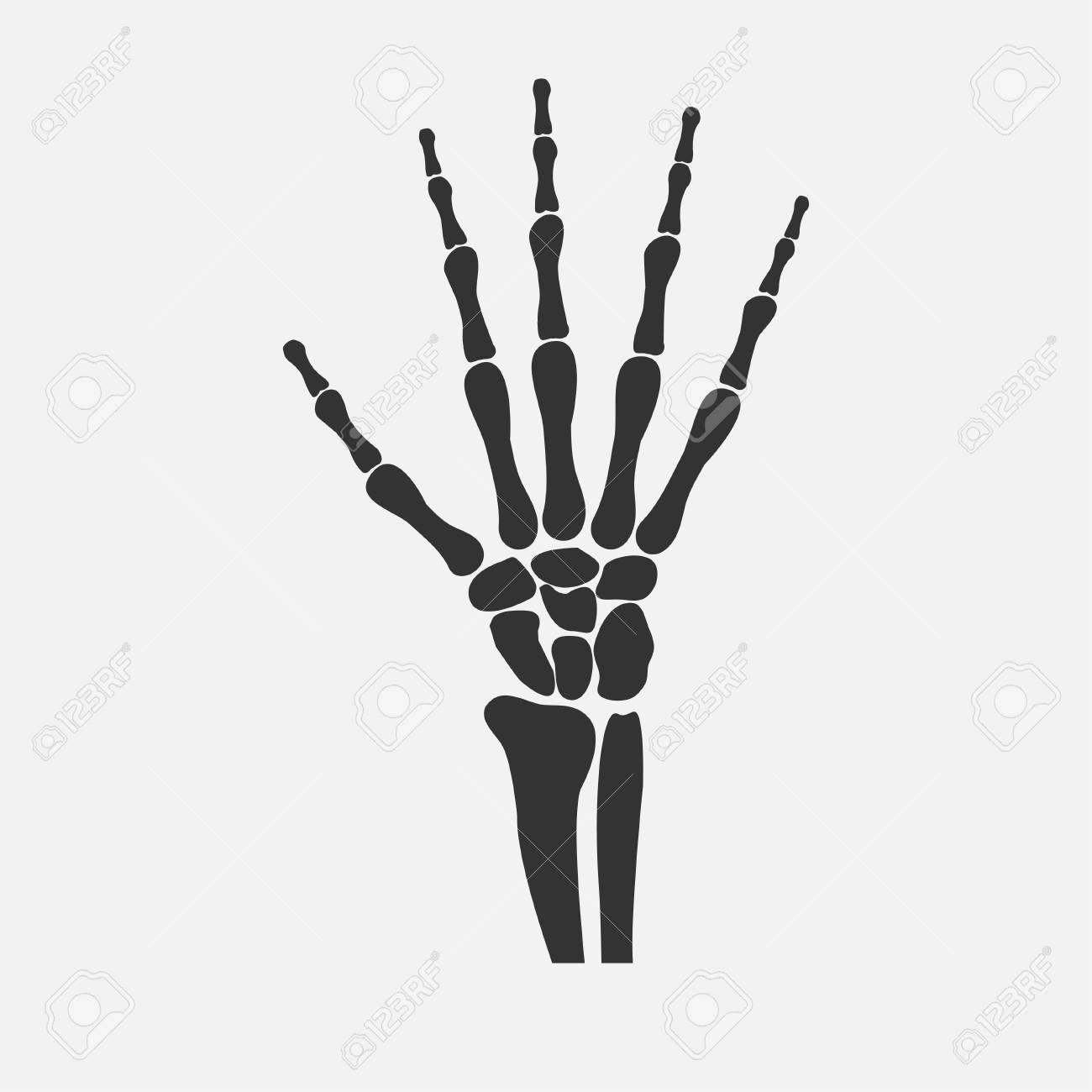 knochen handgelenk