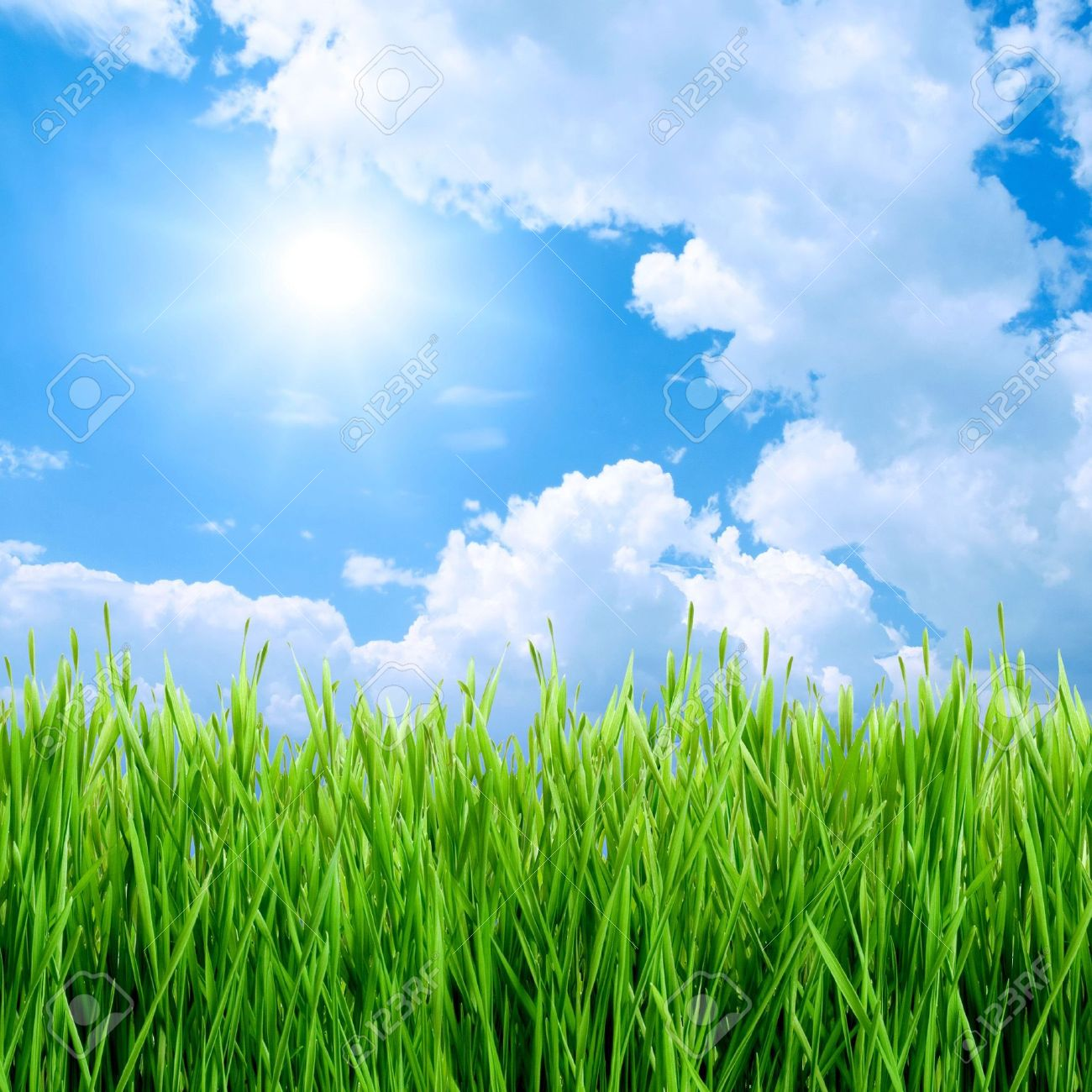 Green grass, sun and blue sky background. Stock Photo - 6739021