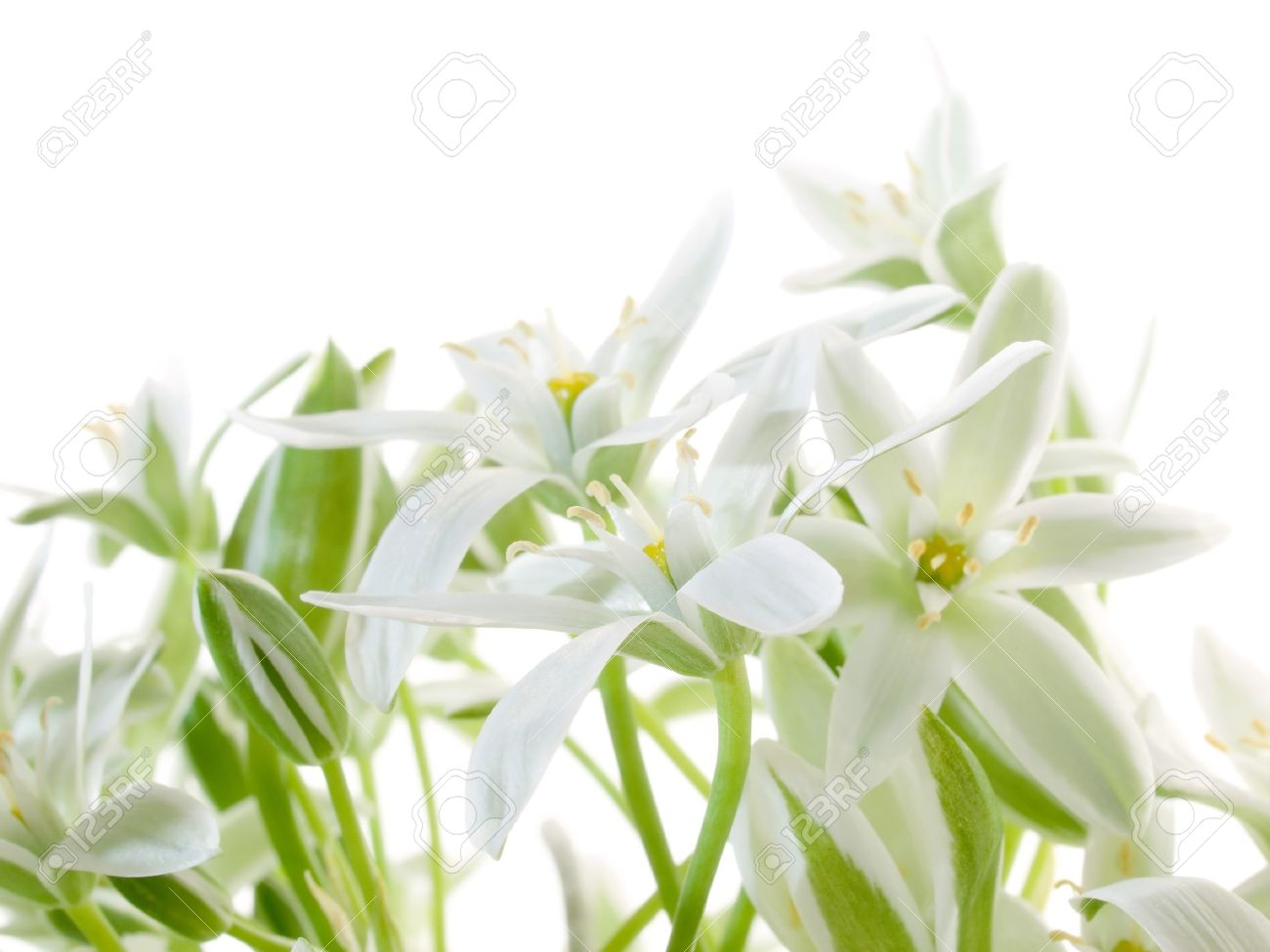 Flowers on white background images stock pictures royalty free flowers white background white flowers isolated on white background stock photo dhlflorist Image collections