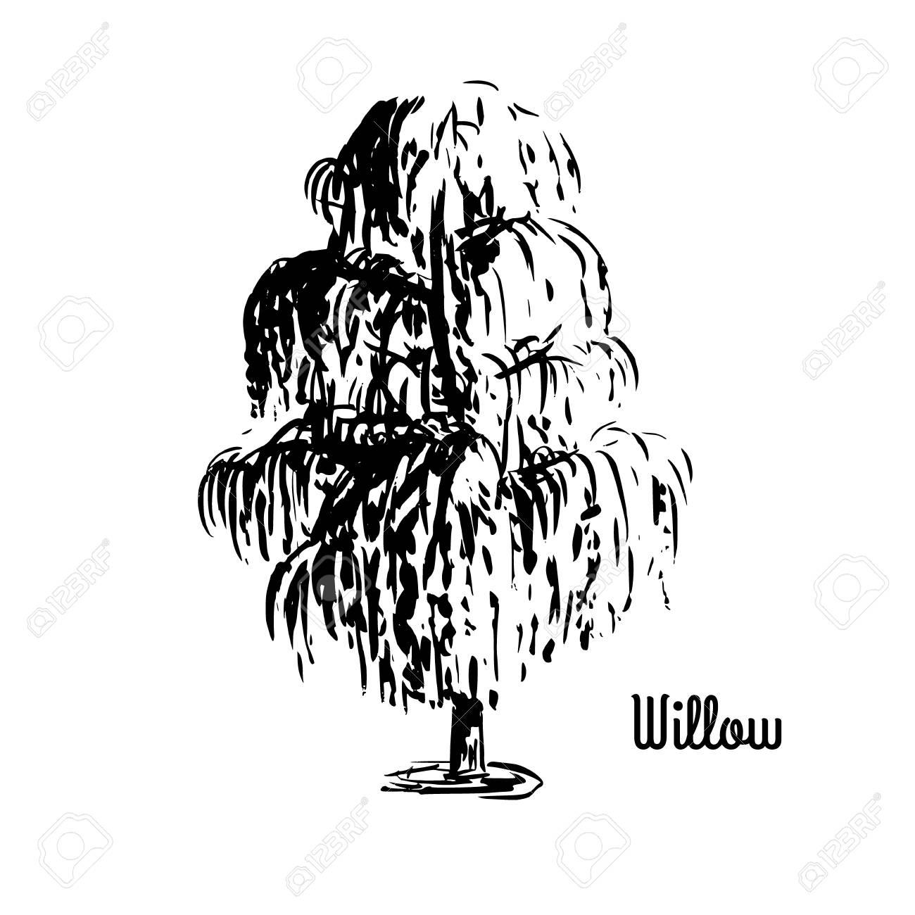 ベクター スケッチ イラスト柳の木が白い背景で隔離の黒いシルエットは