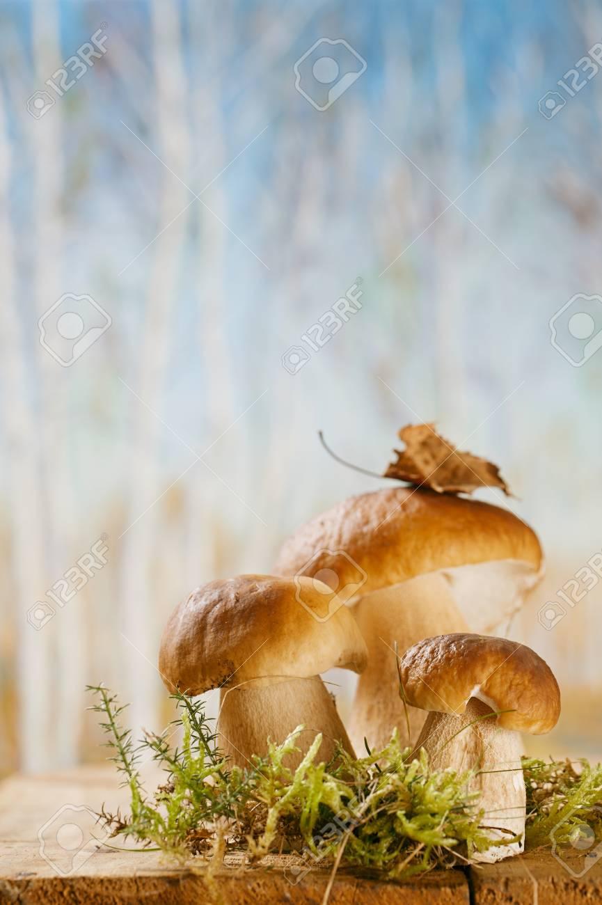 still life with white boletus mushrooms on wooden box, shallow dof Stock Photo - 14993289