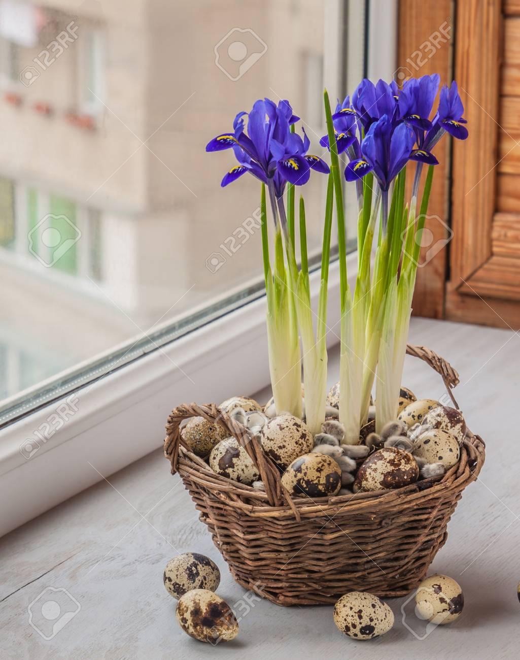 Easter composition of flowering bulbous irises in a basket and quail eggs Stock Photo - 26605336
