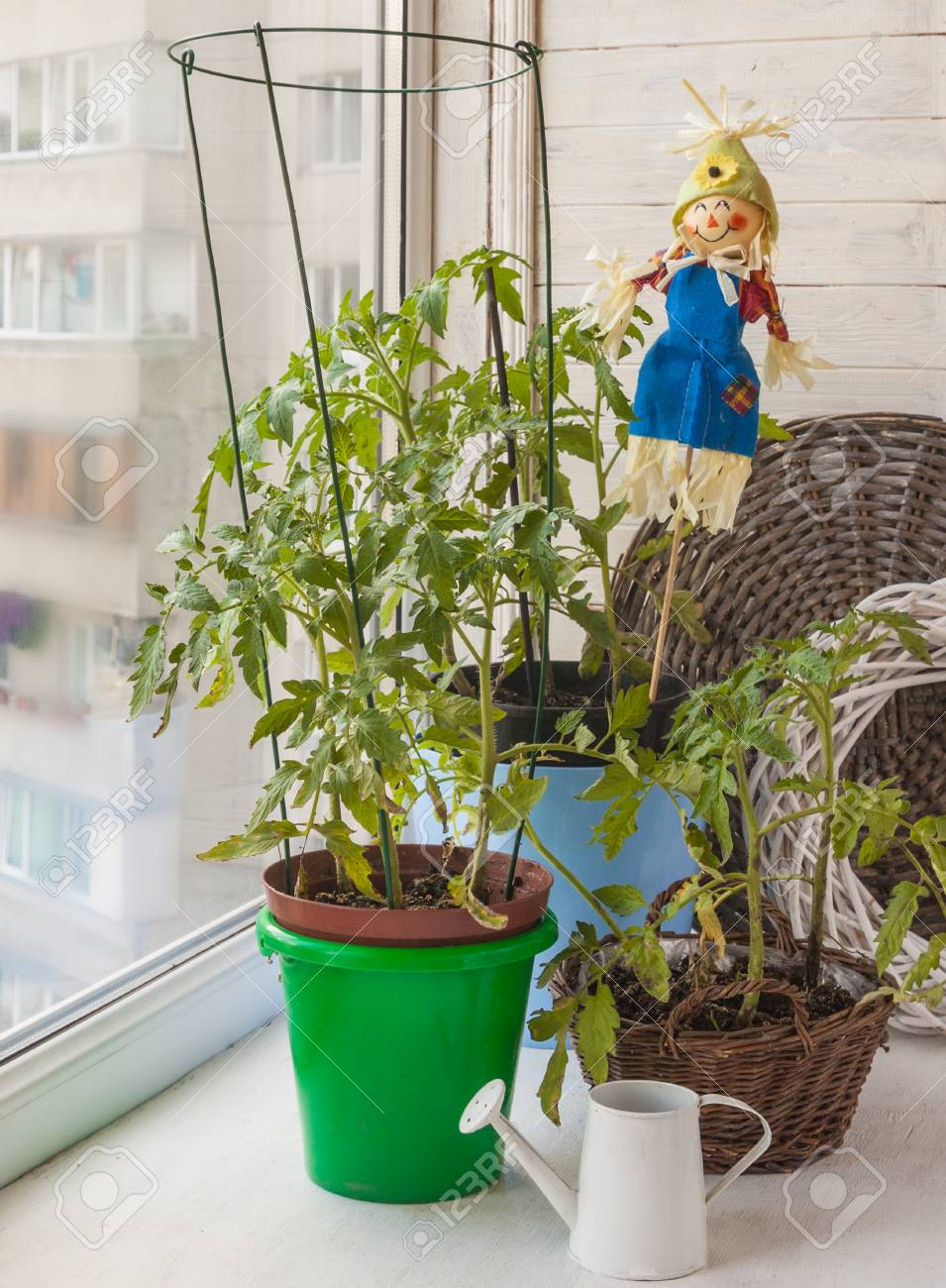 Vegetable Garden With Tomato And The Decorative Scarecrow On.. Stock ...