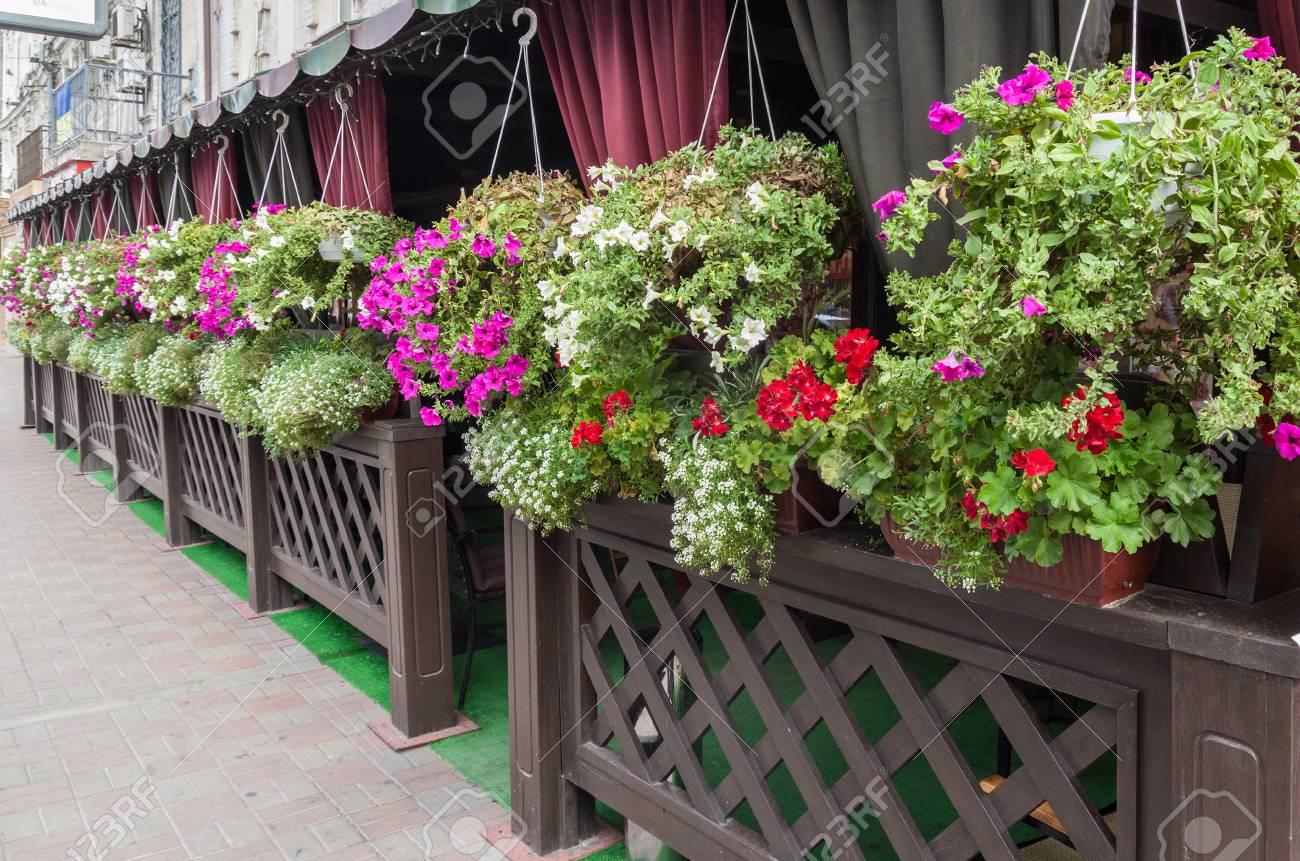 Geranio In Fiore E Petunia Sulla Terrazza Di Un Caffè Di Strada Foto ...