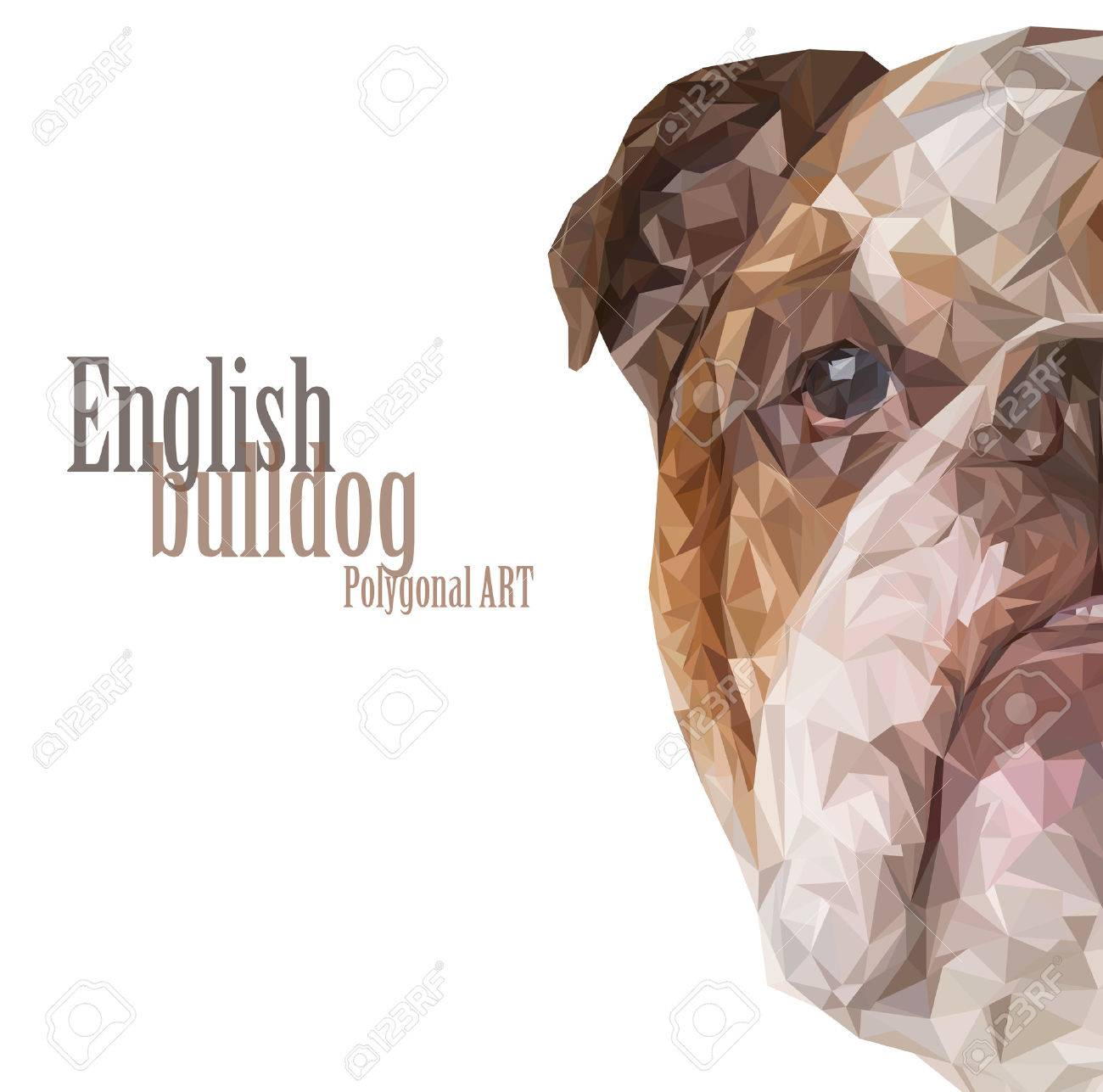 english bulldog polygonal drawing the bitmap drawing on a white background stock photo