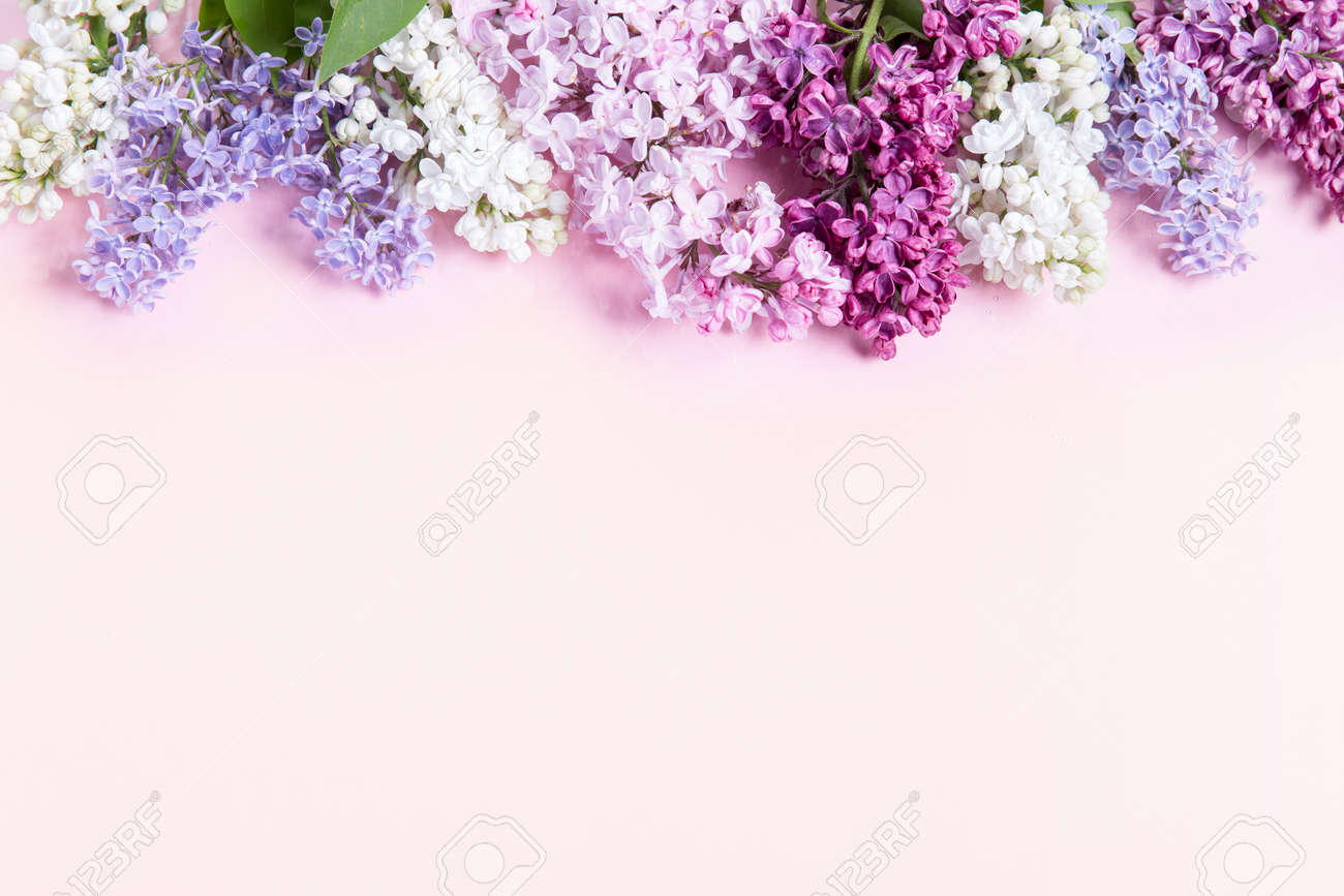 Flowers composition. Frame made of lilac flowers on pink background. Flat lay, top view, copy space - 164752468