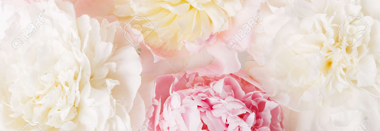 Beautiful aromatic fresh blossoming tender pink peonies texture, close up view. Romantic background - 164621387