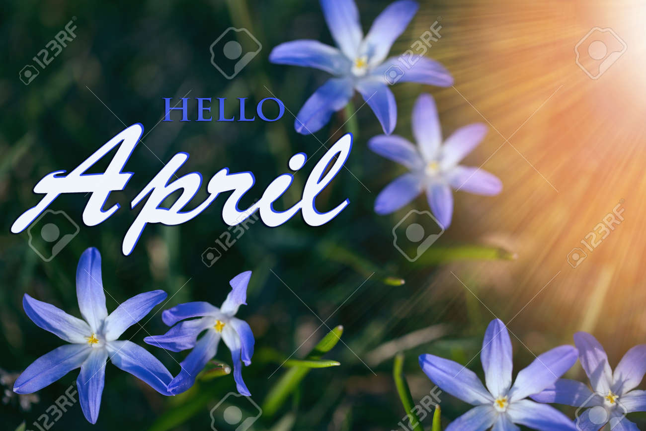 The first spring blue small flowers on a sunny day. Hello April wallpaper, greeting card - 164803318