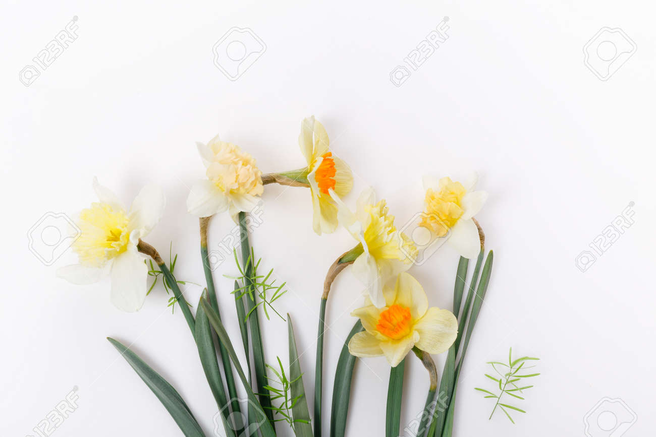 Pretty yellow daffodils on white background isolated - 164901022
