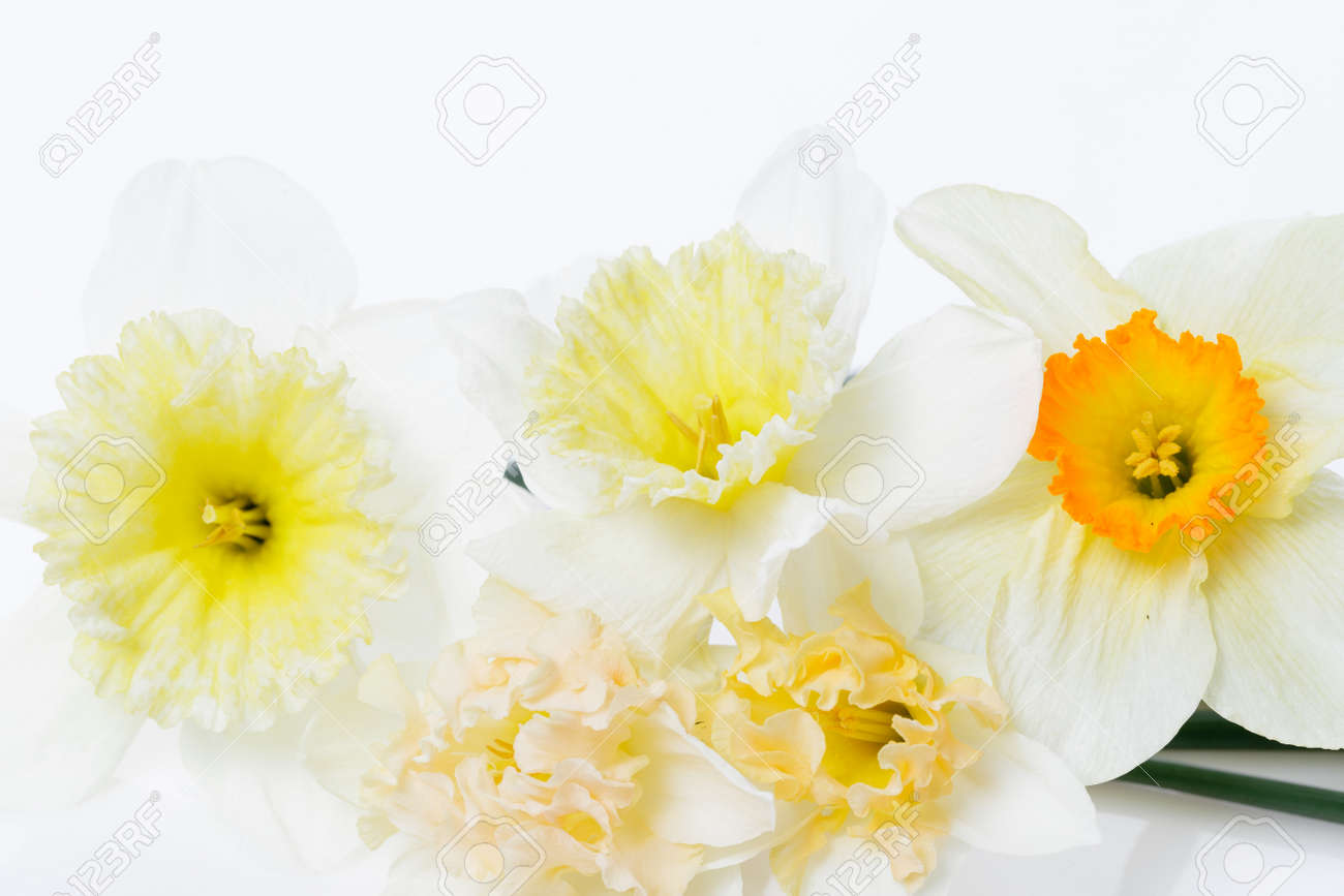 Pretty yellow daffodils on white background isolated - 164900835