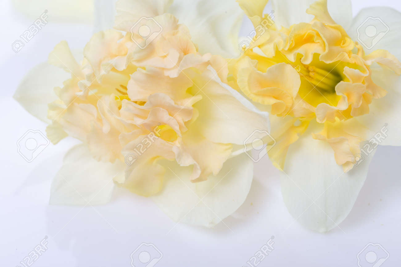 Pretty yellow daffodils on white background isolated - 164900696