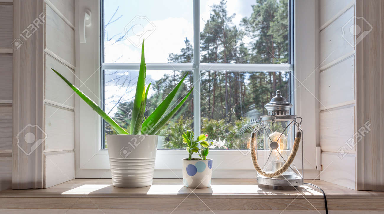 Group of houseplant on white wooden windowsill in a Scandinavian-style room. Home decoration lifestyle - 165187633