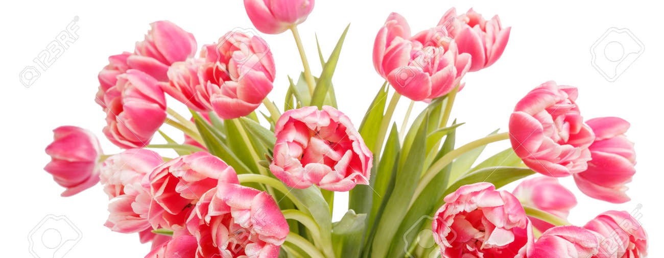 Bouquet of pink tulip isolated on white background. 8 March concept - 164995596
