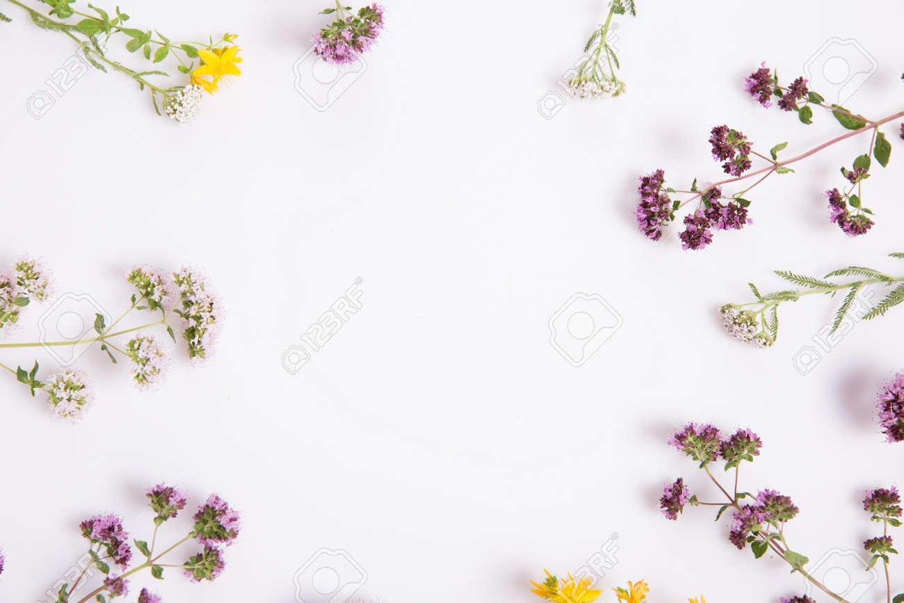 Alternative medicine. Medicinal herbs oregano, St. Johns wort, sage, yarrow on a white background. - 165161723