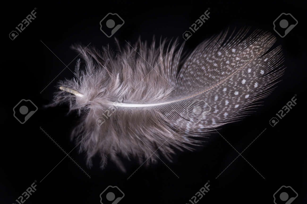 Beautiful flying delicate feathers on a black background, creative layout, soft white feathers floating in the air. - 165360207
