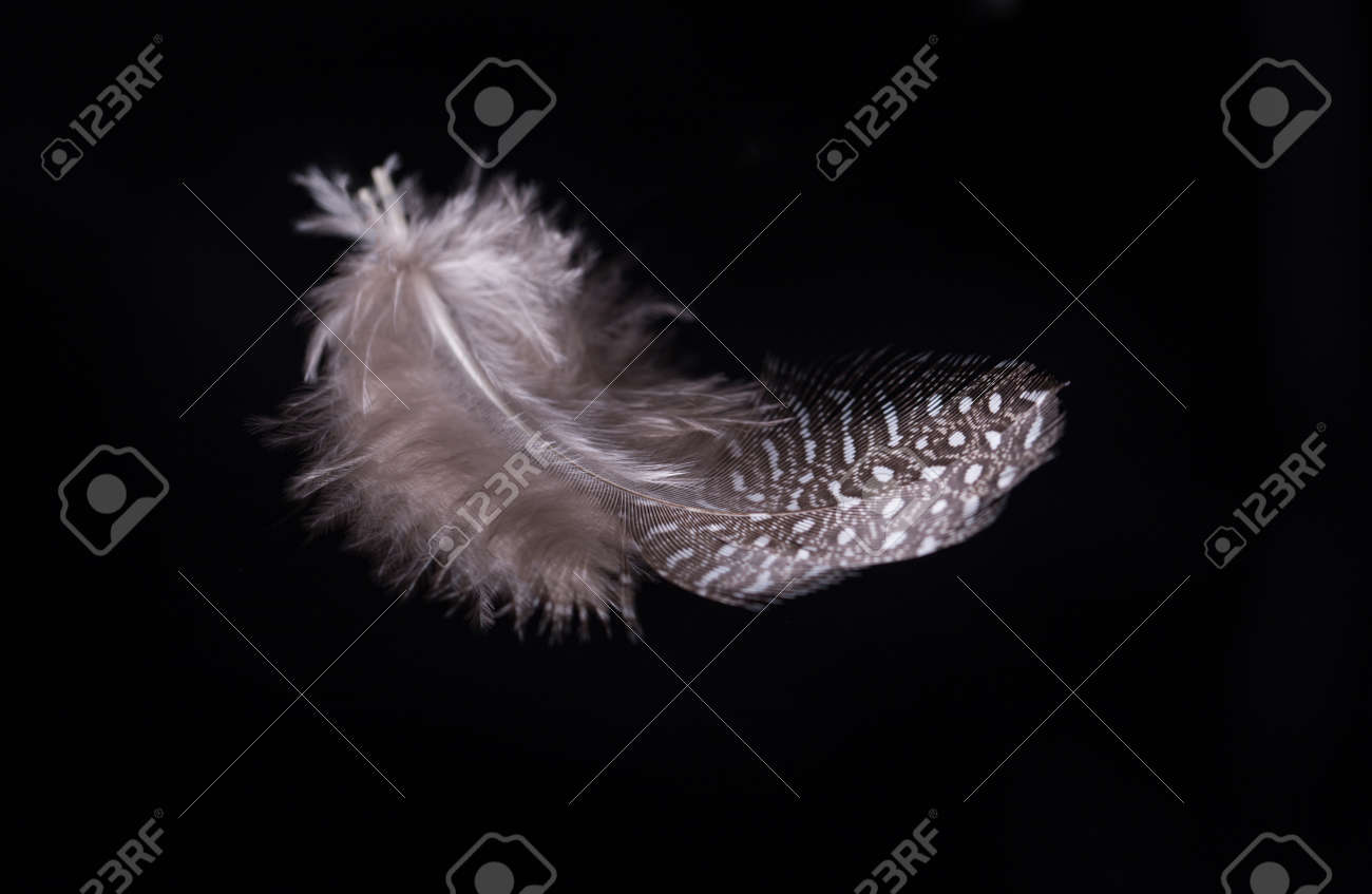 Beautiful flying delicate feathers on a black background, creative layout, soft white feathers floating in the air. - 165360208