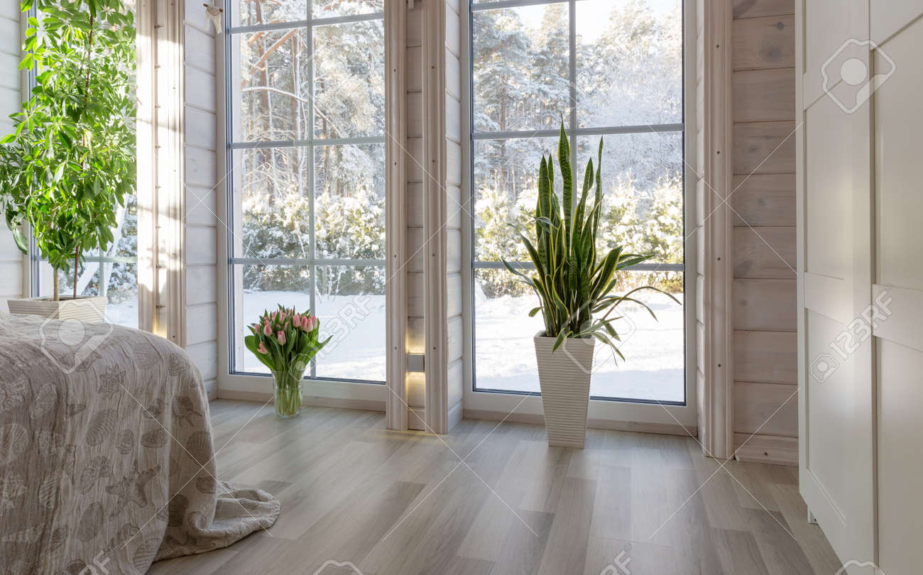 Bright interior of the room in a wooden house with a large window overlooking the winter courtyard. Winter landscape in white window. House plant Sansevieria trifasciata and a bouquet of pink tulips - 165353971
