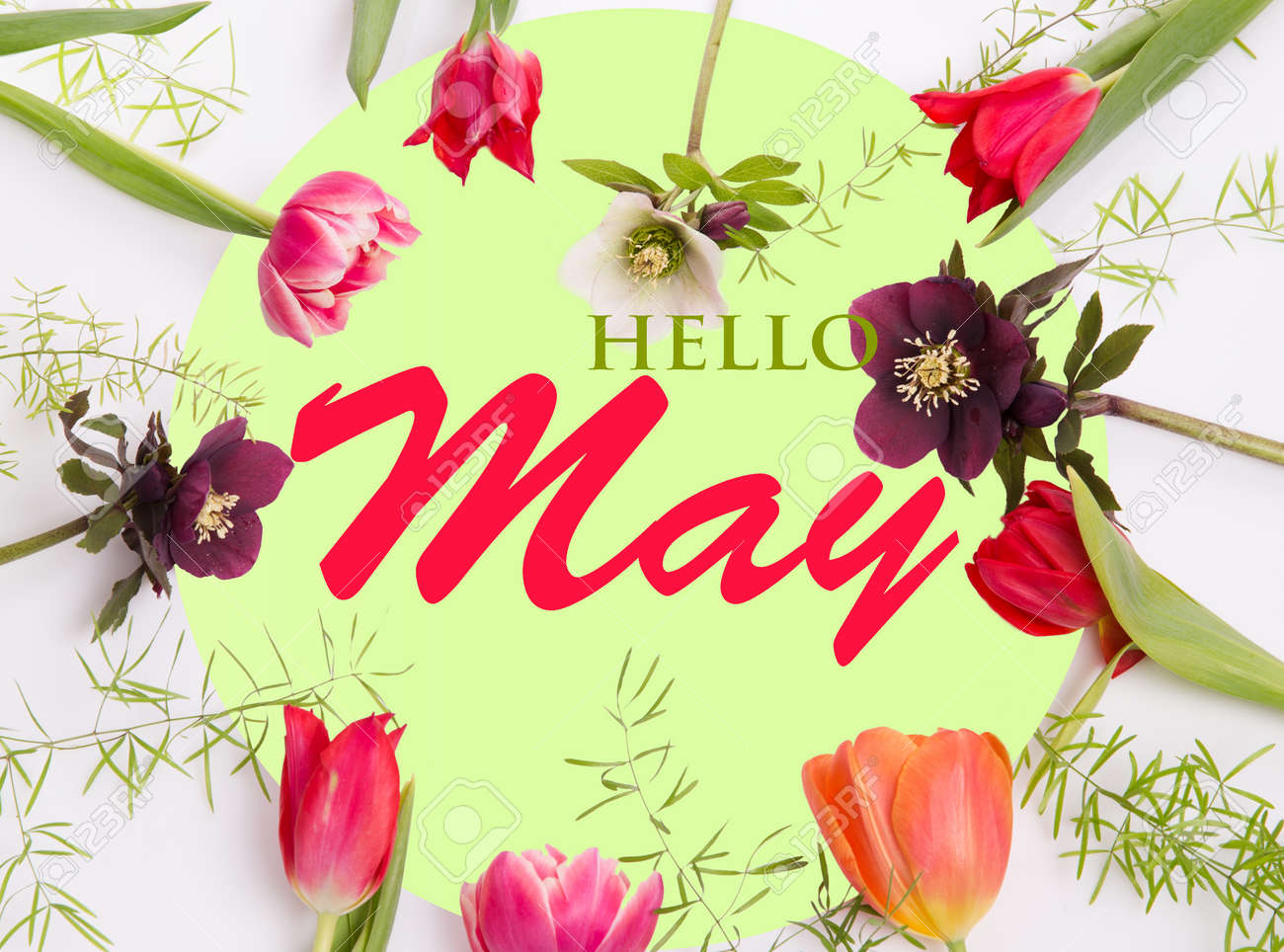 Pink spring flowers on white green background. Hello May wallpaper - 165662988