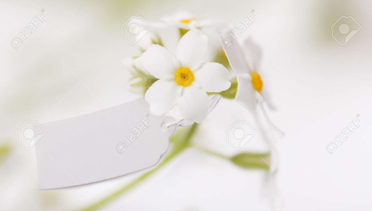 White Label with and delicate white flowers - 165662867