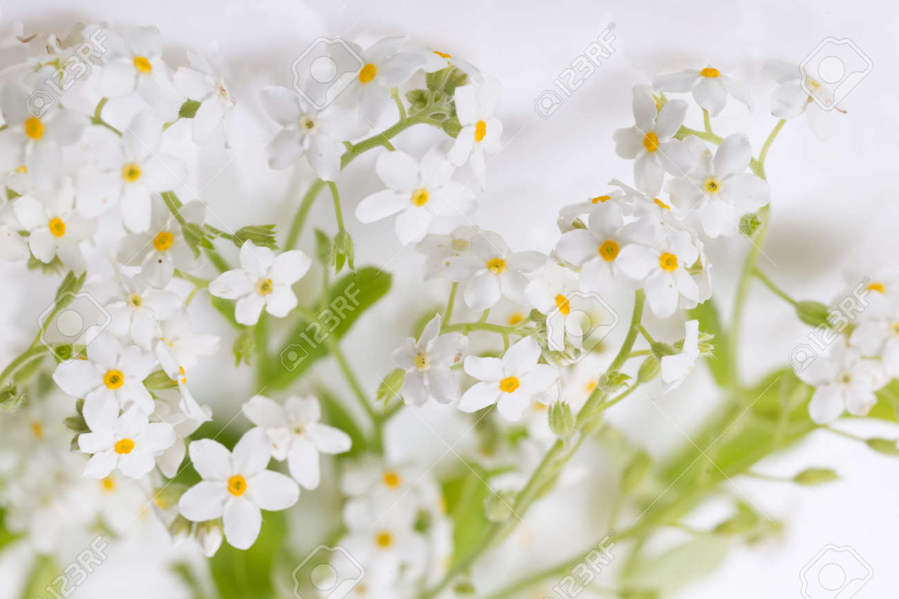 Small delicate white spring flowers, spring background - 165662768