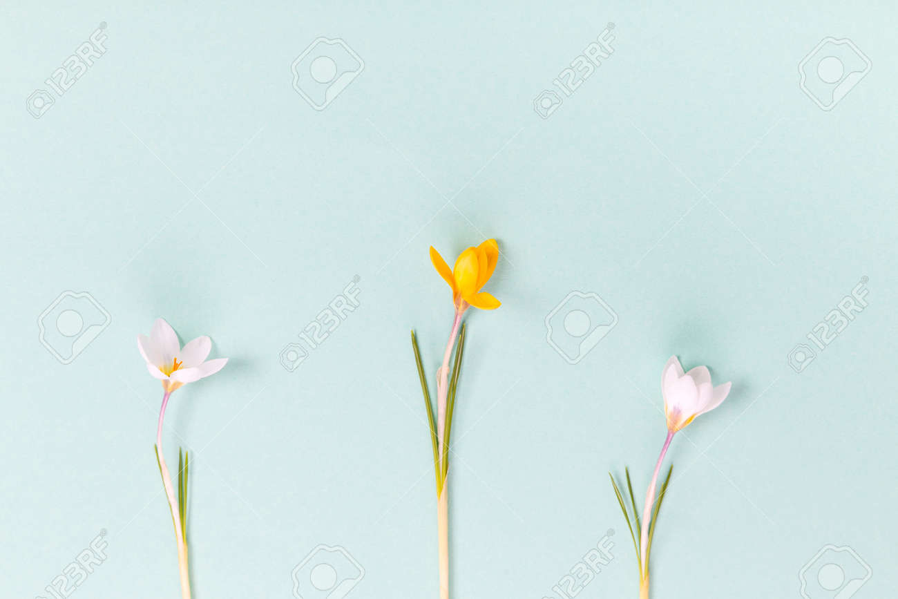 Festive spring Easter border, frame from easter eggs and spring flower crocus on blue background. Stylish easter flat lay blue, great design for any purposes. - 166671838