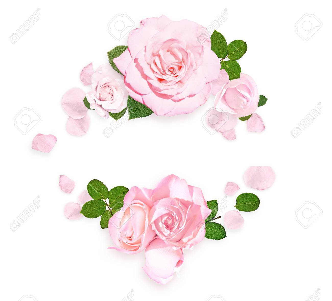Pink Roses On White Background. Rose Frame. Flat Lay Stock Photo ...