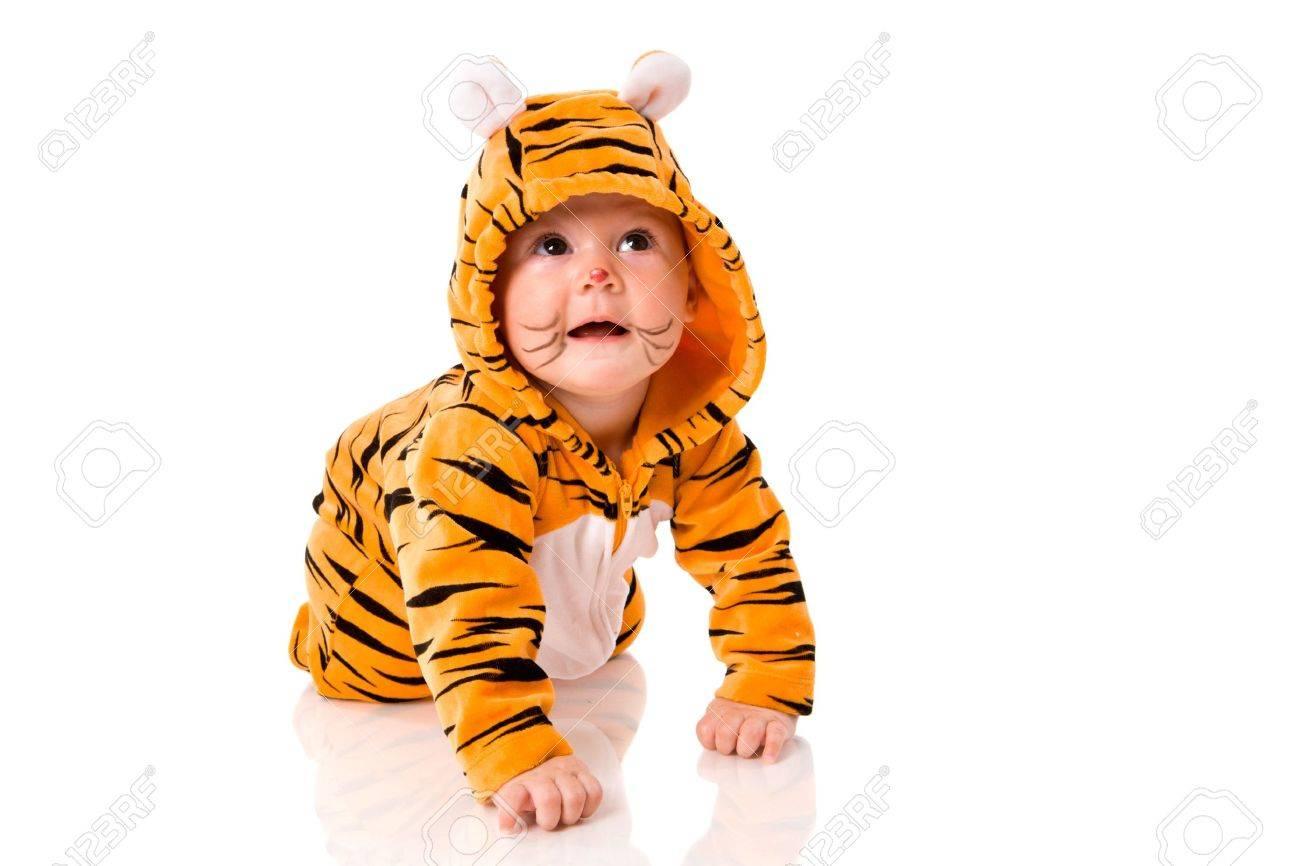 f86e6f760236d Banque d images - Six mois bébé tigre portait costume séance isolé sur blanc