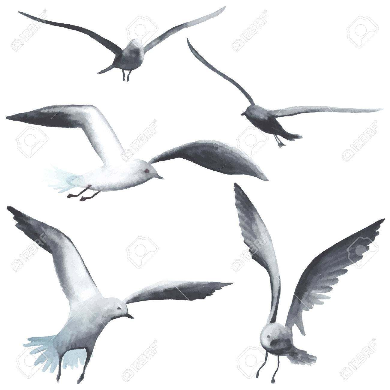 Watercolor seagull each bird is separately royalty free cliparts watercolor seagull each bird is separately stock vector 42184961 altavistaventures Image collections