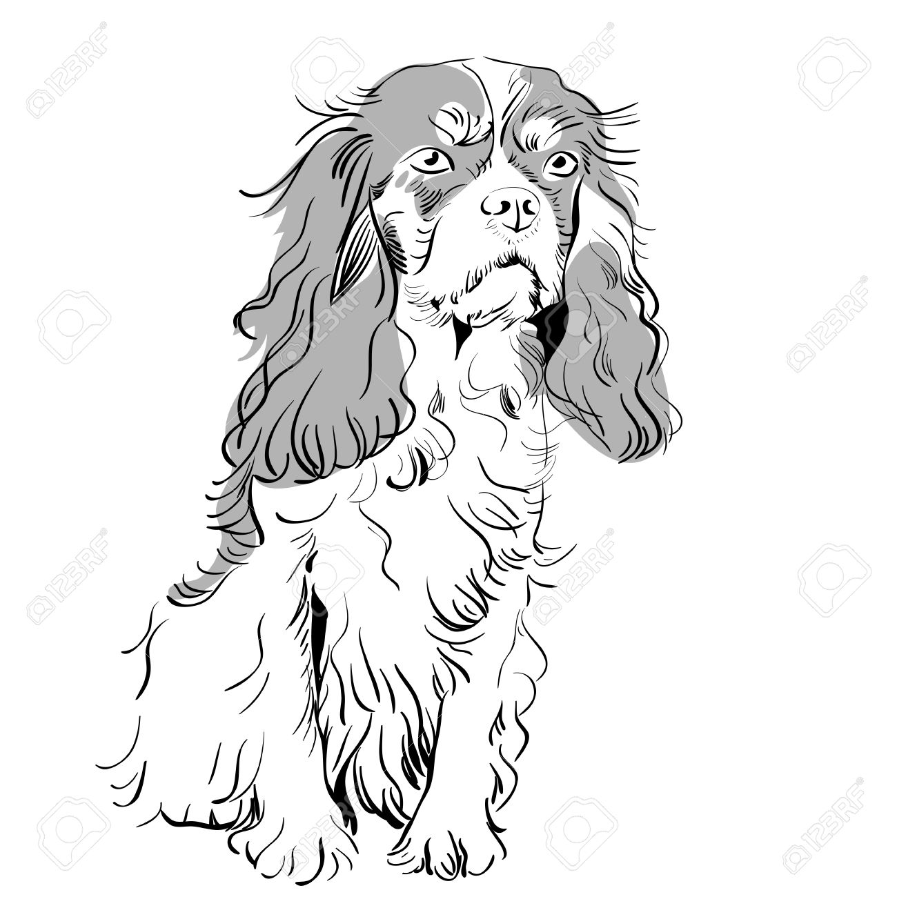 Image Of The Dog Breed Cavalier King Charles Spaniel Stock Vector