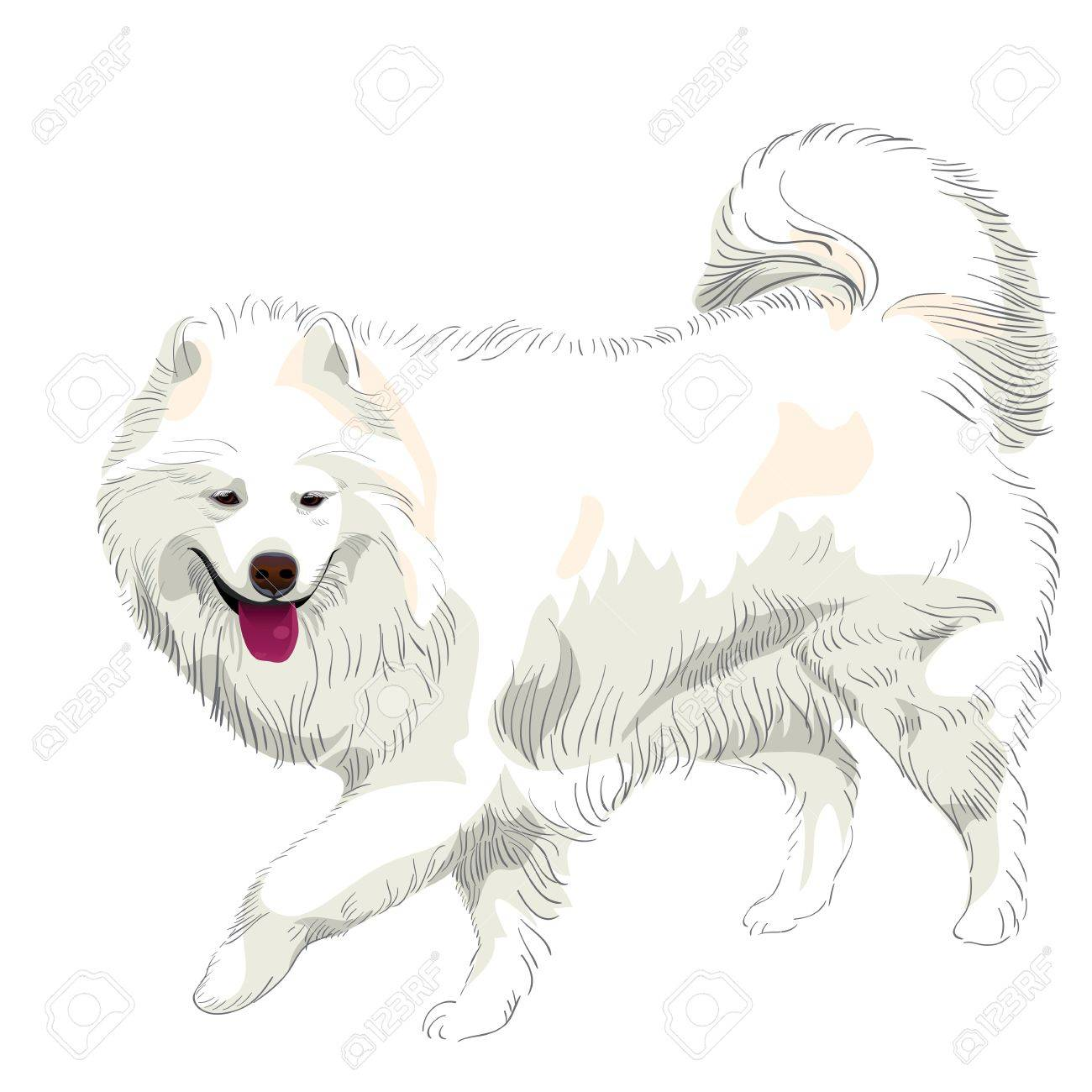 ふわふわした白いサモエド犬が実行され 笑顔のイラスト素材 ベクタ Image