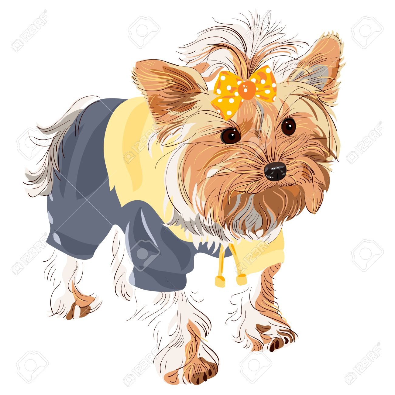 924 yorkshire terrier stock vector illustration and royalty free