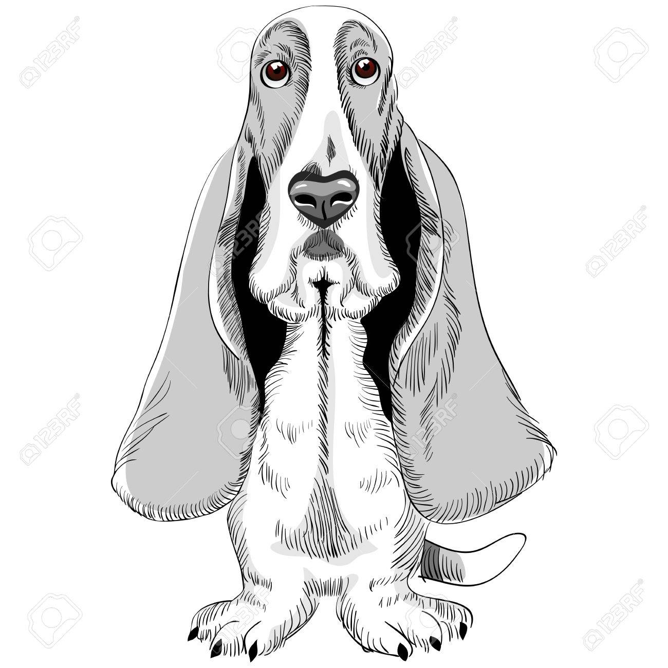 sketch of the dog Basset Hound breed sitting Stock Vector - 10612699