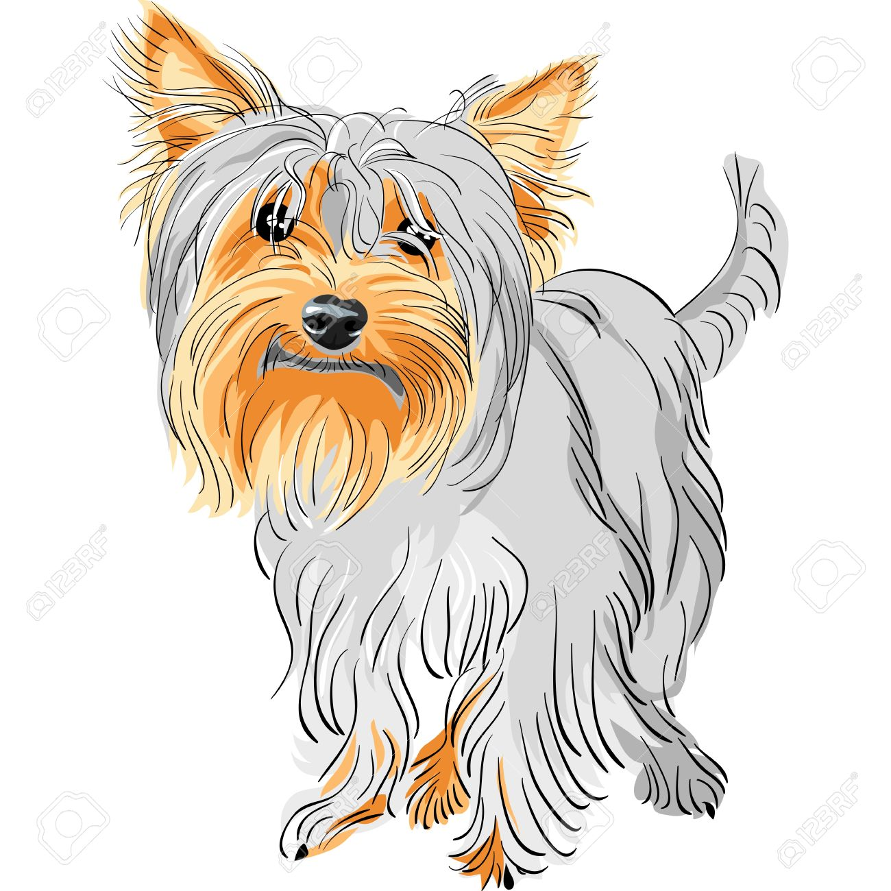 Coloring pages yorkie