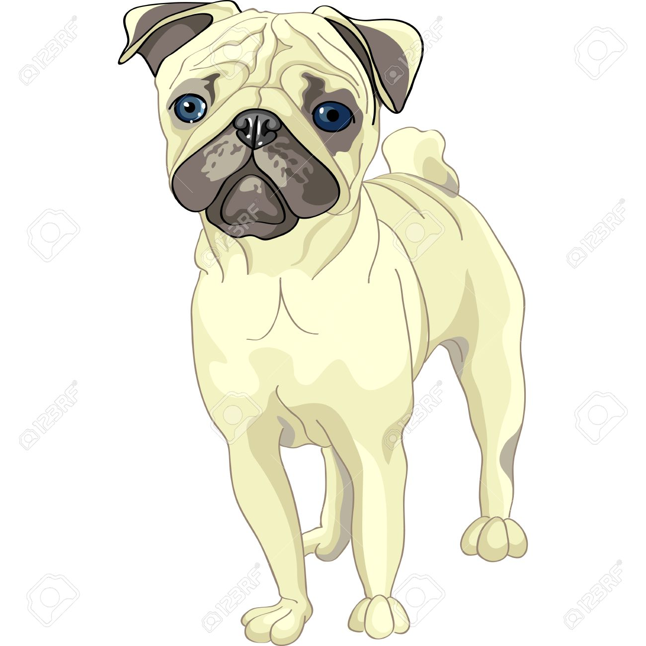 color sketch of the dog fawn pug breed stock vector 11967154