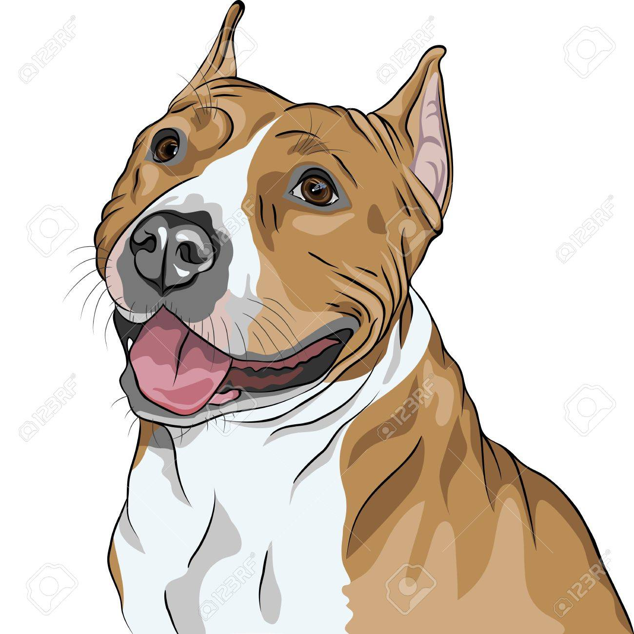 sketch, closeup portrait of the dog American Staffordshire Terrier breed smiles Stock Vector - 12798361