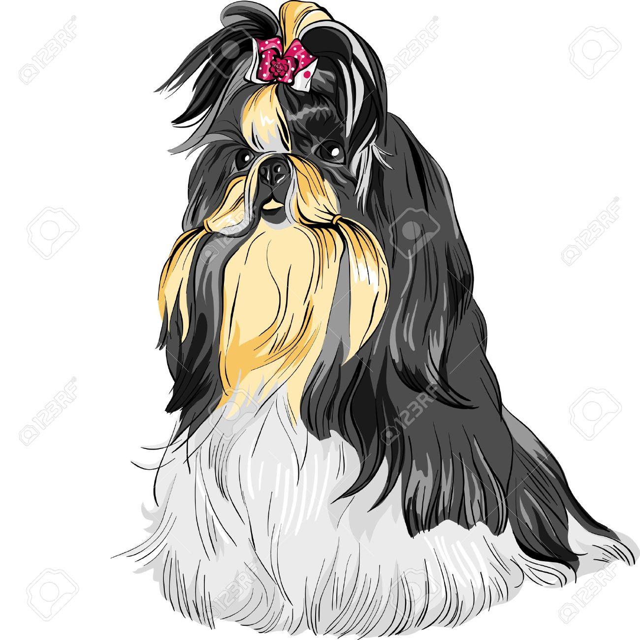color sketch of the dog Shih Tzu dog-lion; dog-chrysanthemum Chinese breed - 13185098