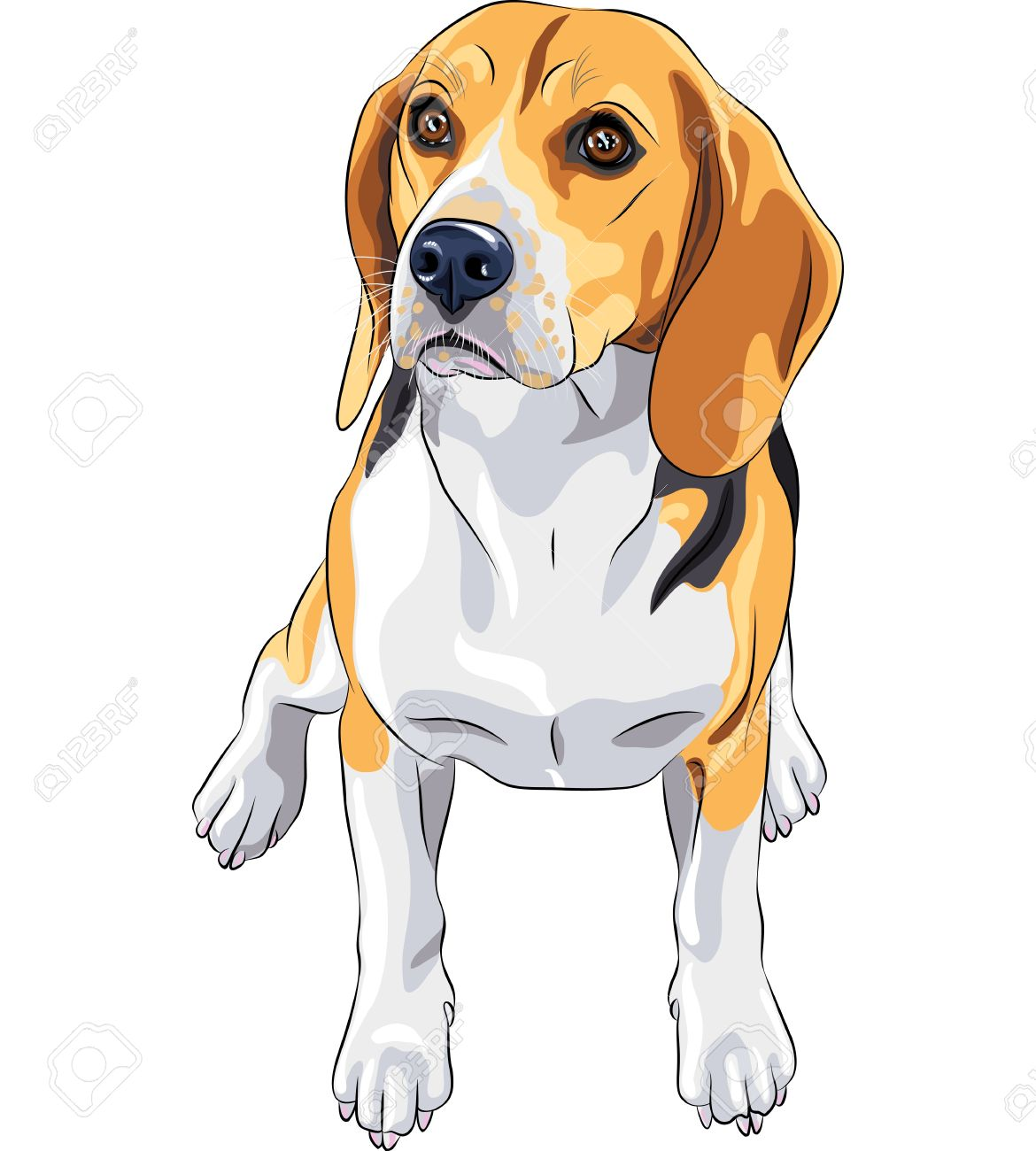 color sketch of the dog Beagle breed sitting Stock Vector - 15322854