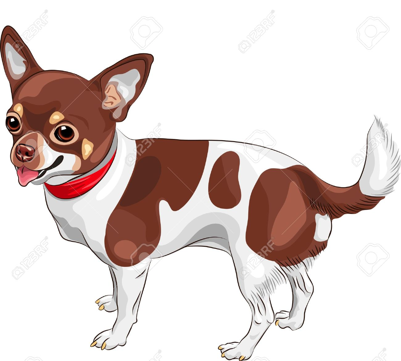 color sketch of the cute dog Chihuahua breed smiling Stock Vector - 15357484