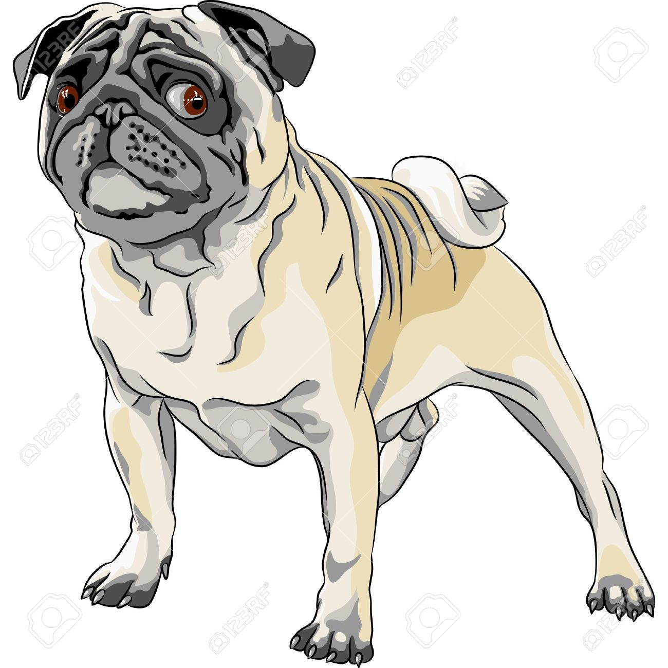 color sketch angry dog fawn pug breed stock vector 17053258